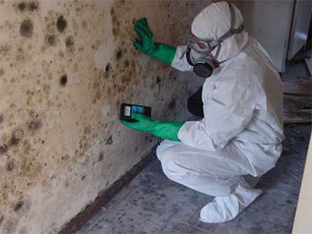 Mold Remediation Services in Southwest Florida.